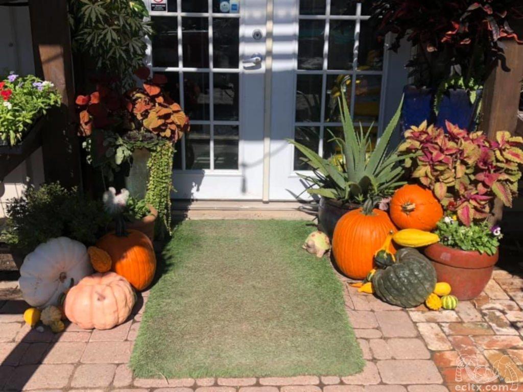 Fall Seasonal Designs